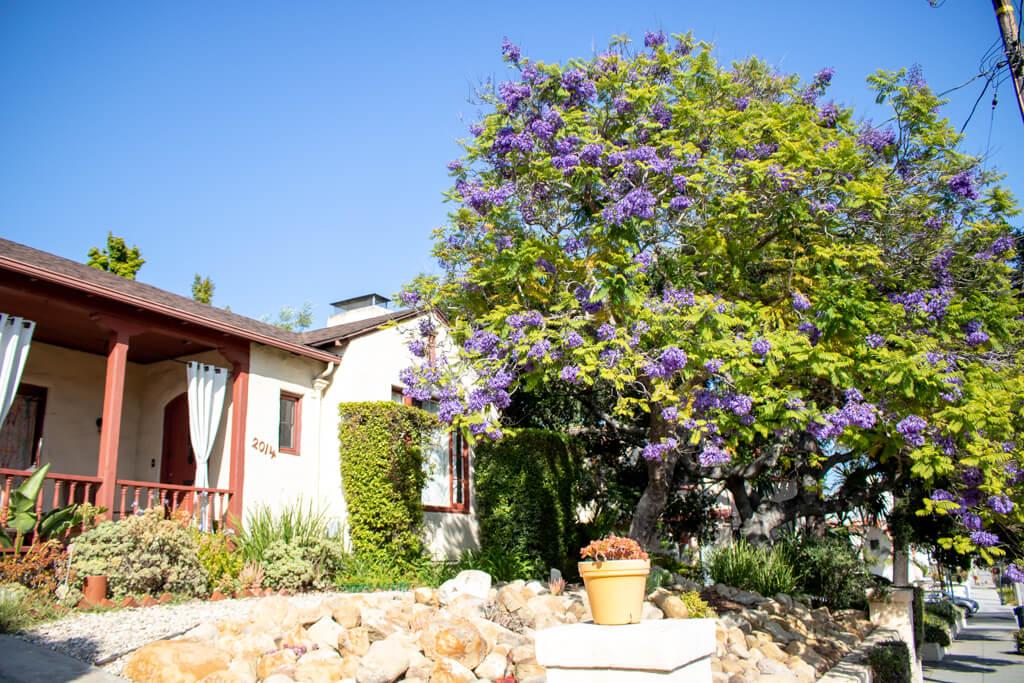links kleines Haus - rechts ein lila blühender Strauch