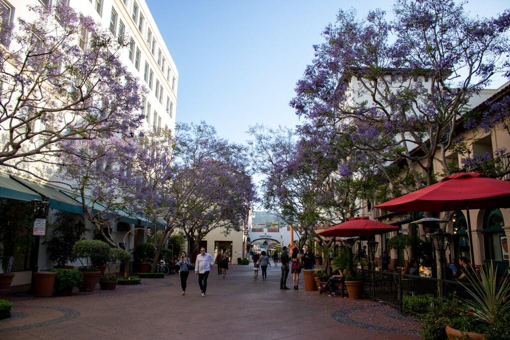 Fußgängerzone zwischen zwei Häuserreihen mit blühenden Bäumen