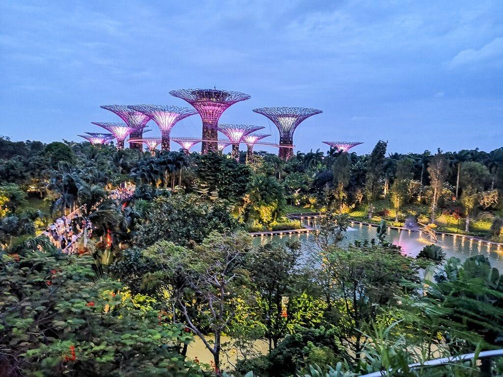 Blick auf die Supertree Grove in Singapur