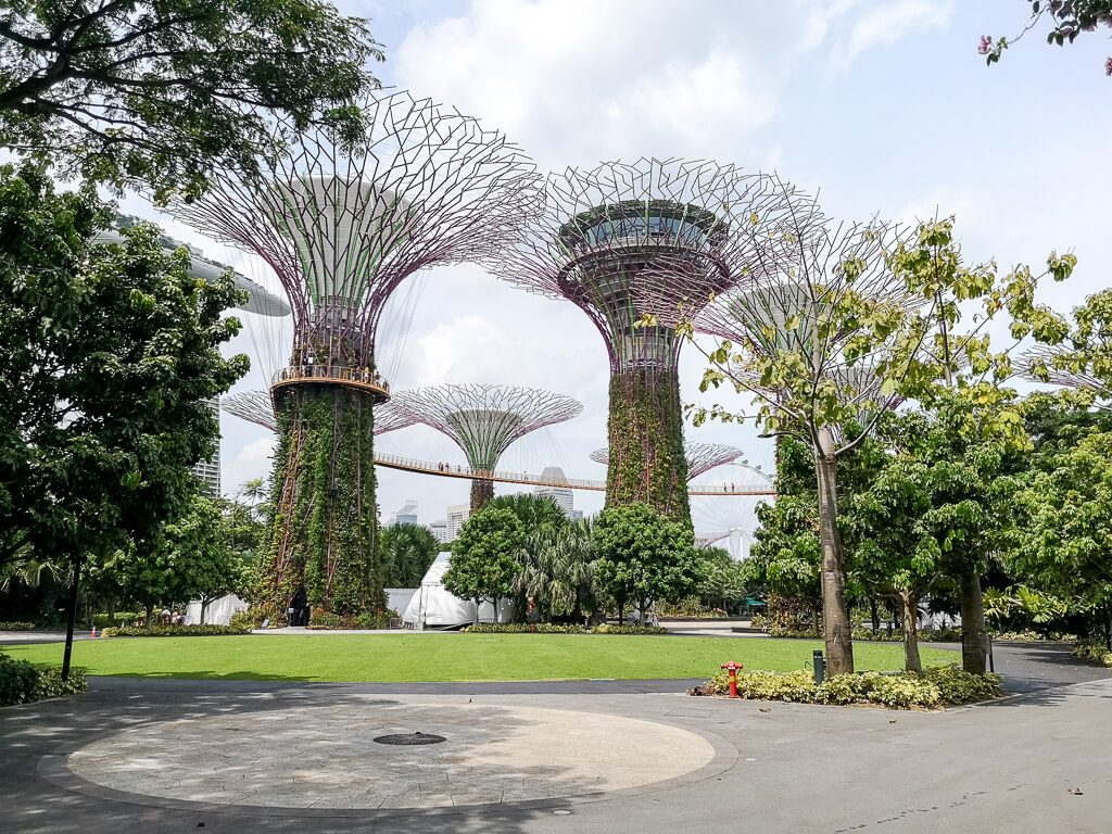 Supertrees  - Gardens by the Bay