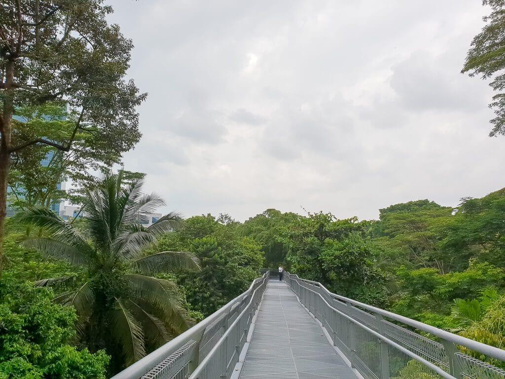 Baumwipfelpfad in Singapur