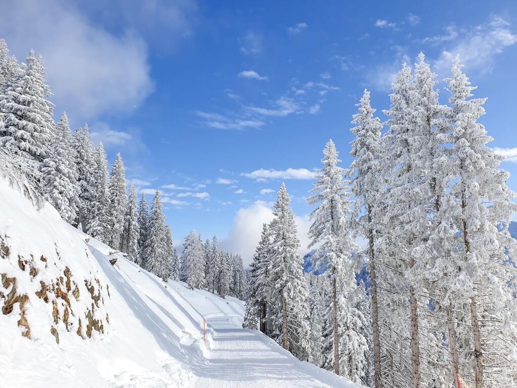 Schneebedeckter Weg umringt von Bäumen