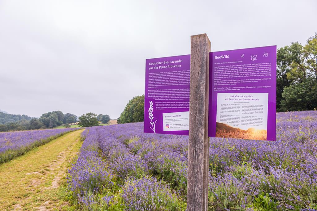 """Hinweisschild """"Lippische Provence"""" steht vor einem großen Lavendelfeld mit blühendem Lavendel"""