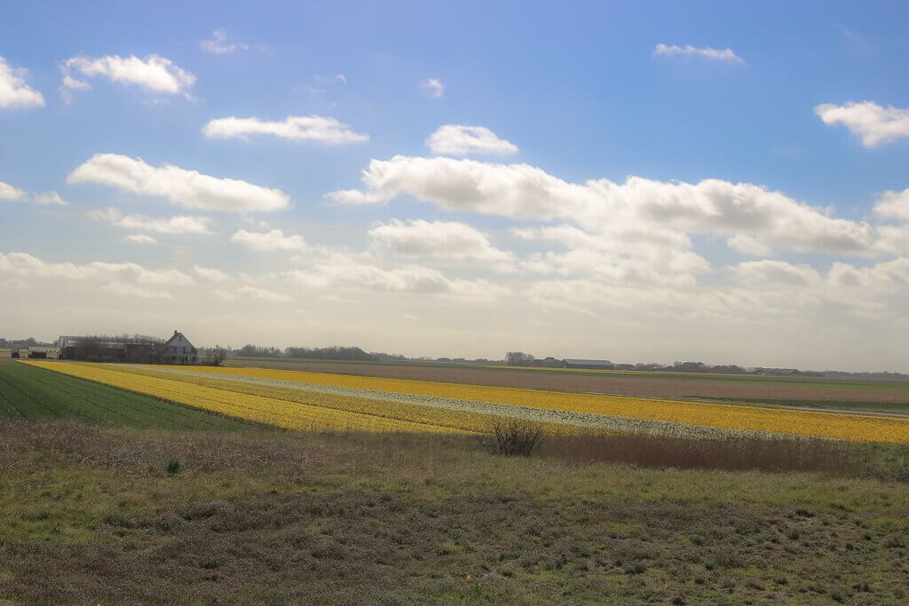 Texel - Blumenfelder