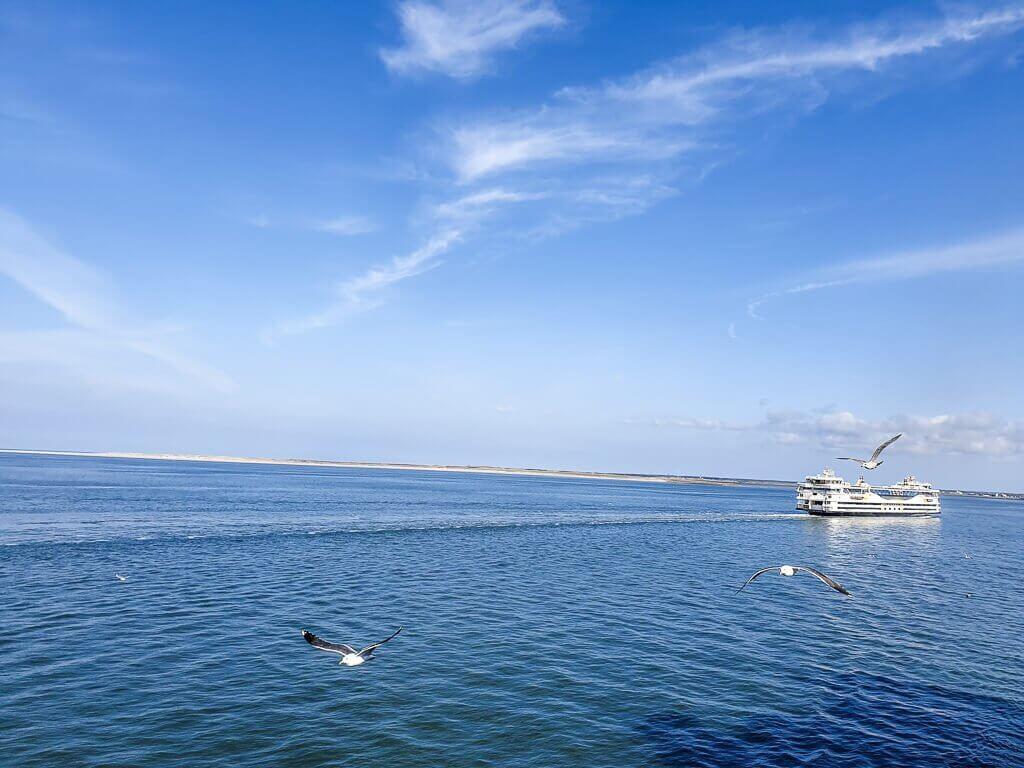 Texel - Nordsee, Fähre und Möwen