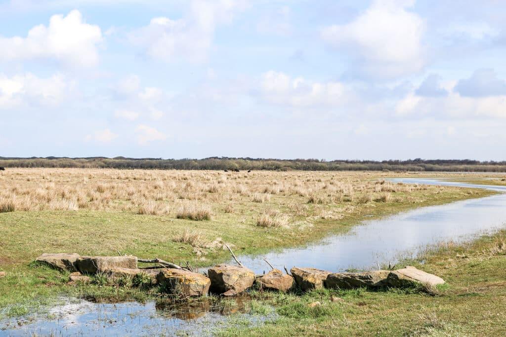 kleiner Fluss fließt durch Wiesen