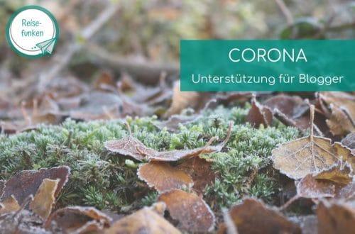 Blätter liegen auf gefrorenem Moos