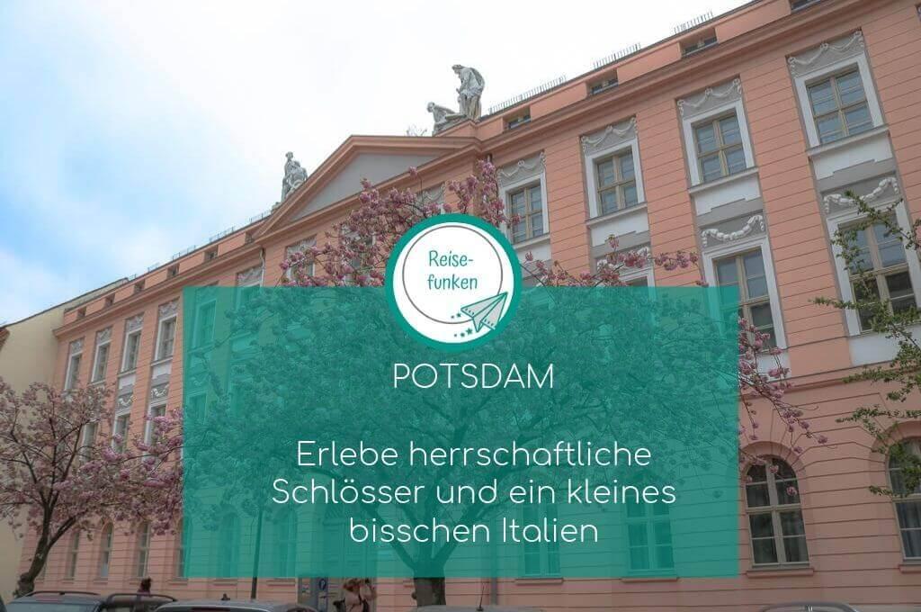 Potsdam - Kirschblüten