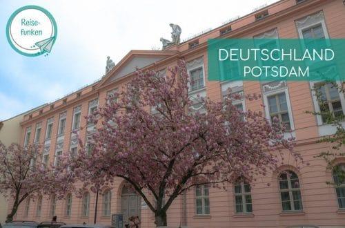 Potsdam - Gebäude mit blühendem Kirschbaum