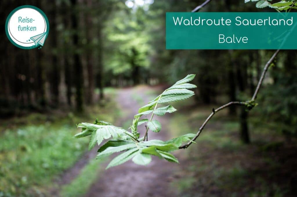 Blätter an einem Ast vor einem Waldweg