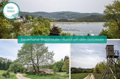 Titelbild Waldroute Sorpesee