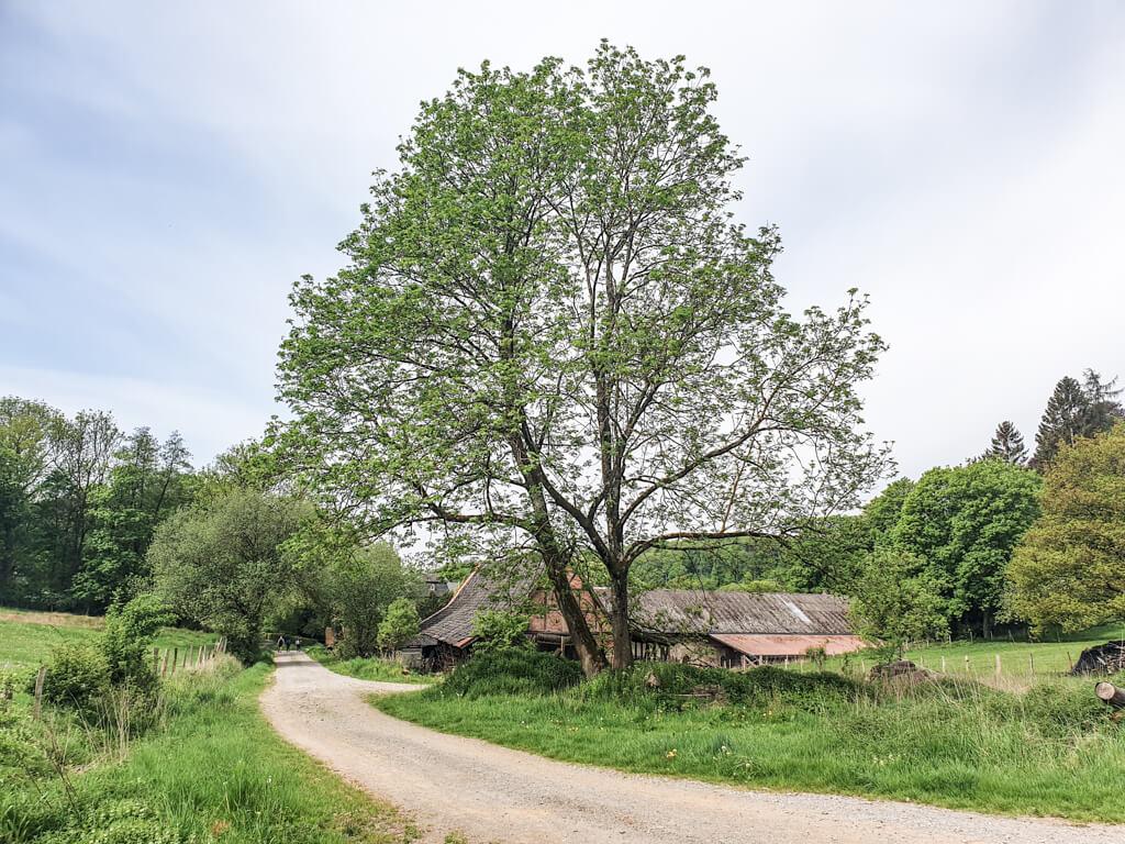 Halb verfallener Schuppen aus Fachwerk steht am Wegesrand hinter einigen Bäumen