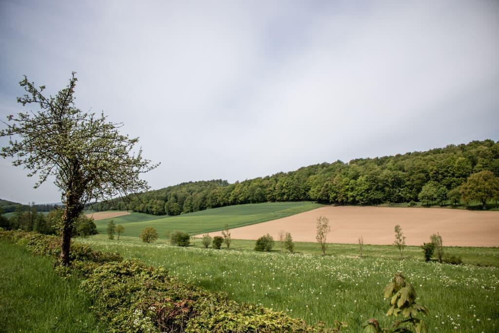 Blick auf Felder und Wiesen mit blühenden Blumen