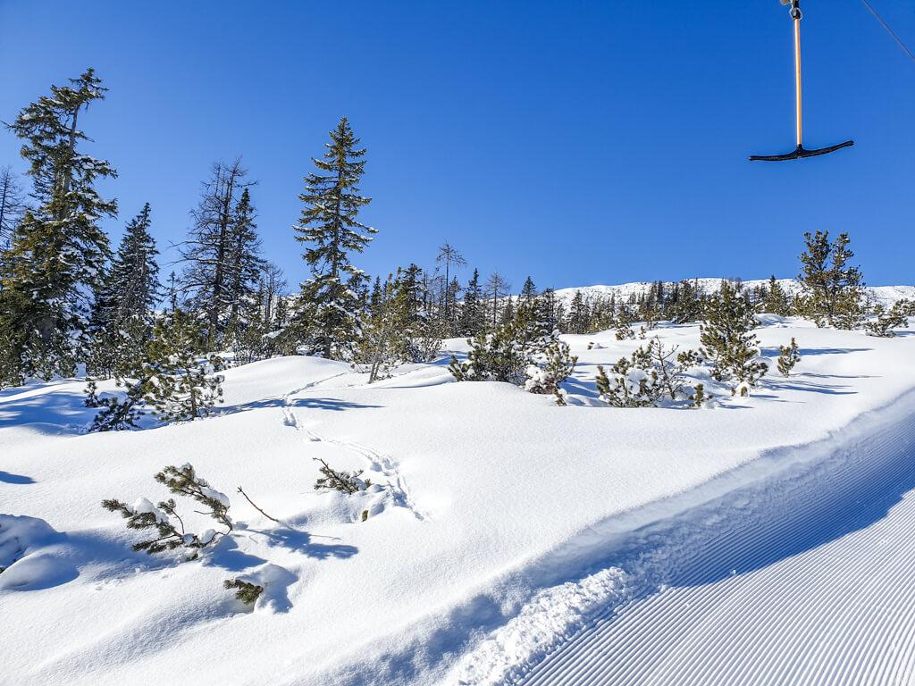 Schlepplift inmitten von schneebedeckten Bäumen